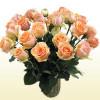 24 Versilia Roses (Peach)