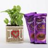 Syngonium Plant In Vase With Dairy Milk Silk Chocolates
