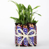 2 Layer Lucky Bamboo With Snickers