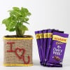 Valentine Special Syngonium Plant With Dairy Milk Chocolates