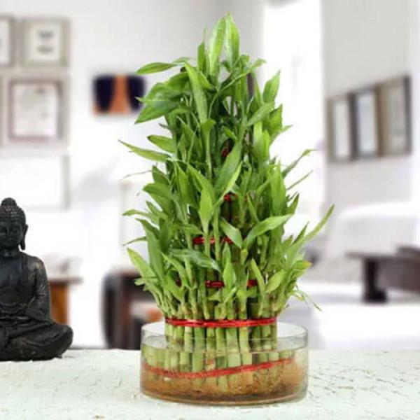 5 Layer Lucky Bamboo