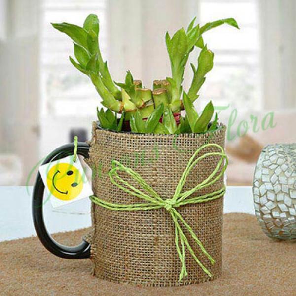 Mug Full of Lucky Bamboo Plant