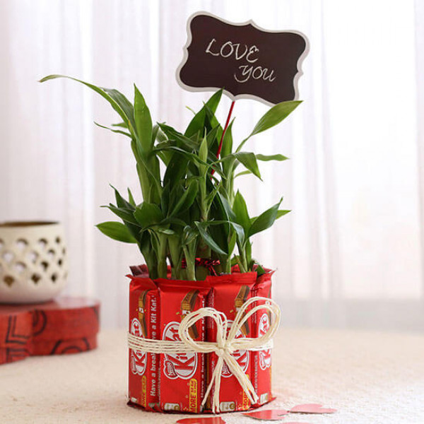 Lucky Bamboo with Kit Kat Chocolates Combo