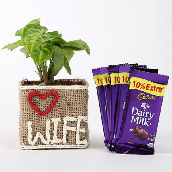 Syngonium Plant & Dairy Milk Chocolates