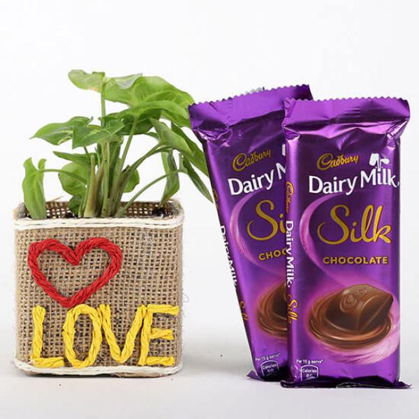 Syngonium Plant With 2 Dairy Milk Silk Chocolates