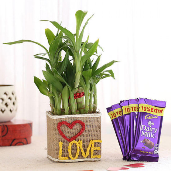 2 Layer Lucky Bamboo In Love Vase With Dairy Milk Chocolates