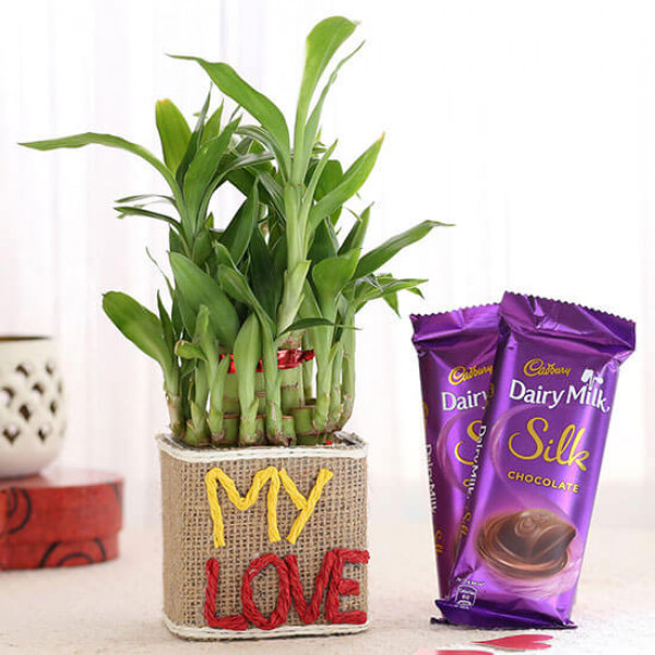 2 Layer Lucky Bamboo In My Love Vase With Dairy Milk Silk Chocolates