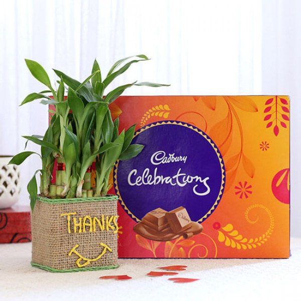 2 Layer Lucky Bamboo In Glass Vase With Cadbury Celebrations