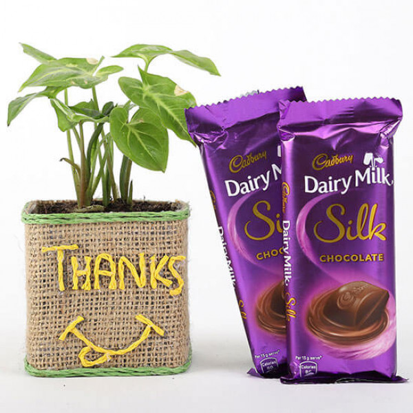 Syngonium Plant In Glass Vase With Dairy Milk Silk Chocolates