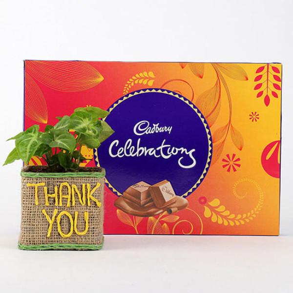 Syngonium Plant In Thank You Vase With Cadbury Celebrations