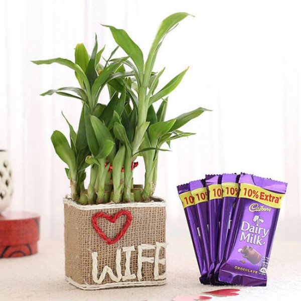 2 Layer Lucky Bamboo For Wife With Dairy Milk Chocolates