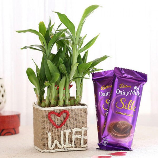 2 Layer Lucky Bamboo For Wife With Dairy Milk Silk Chocolates