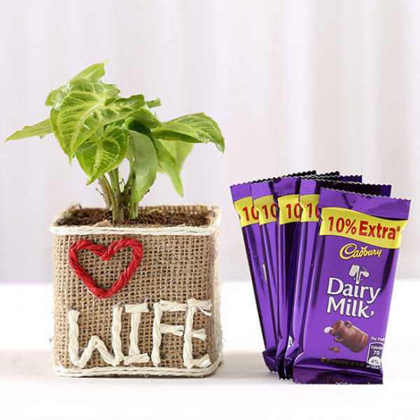 Syngonium Plant in Love Wife Vase With Dairy Milk Chocolates