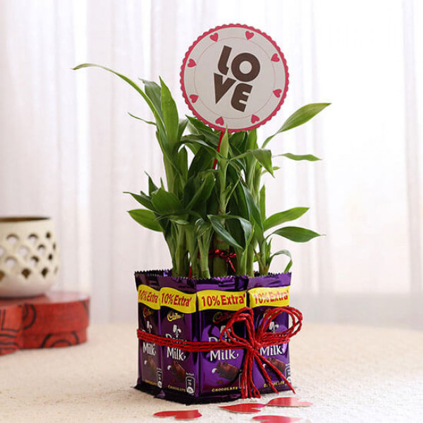 Lucky Bamboo with Love Tag & Dairy Milk Combo
