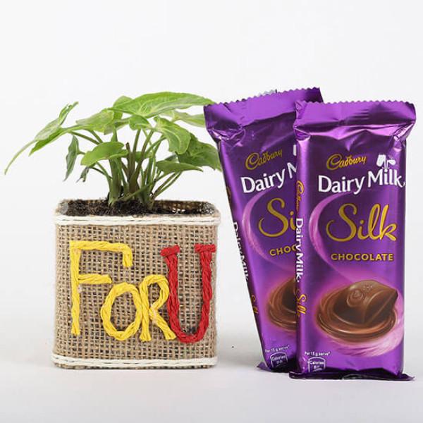 Syngonium Plant in For You Vase & Dairy Milk Silk Chocolates